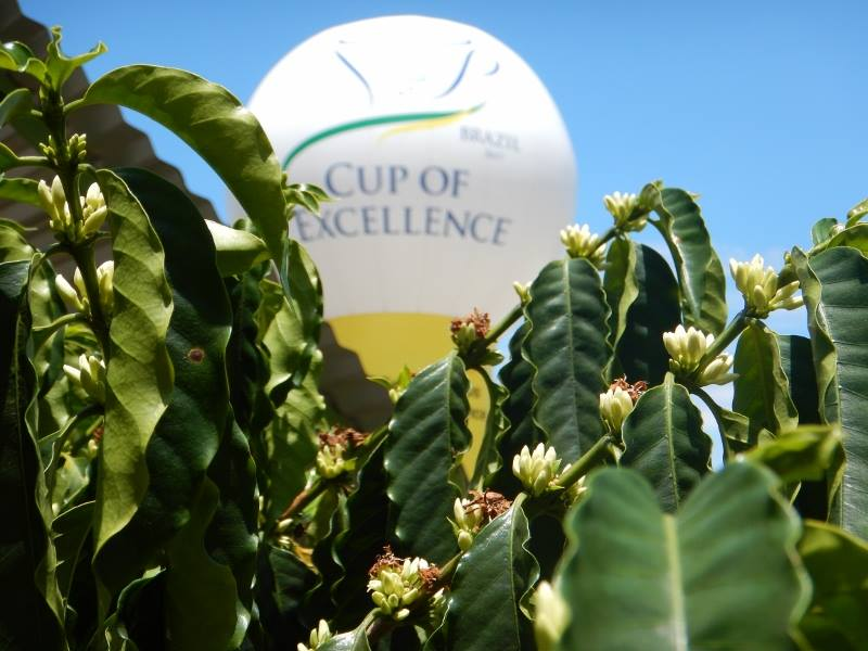 Cup of Excellence Brazil 2017